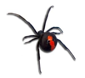 Pest Control Central Coast - Spiders