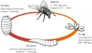 Pest Control Fly