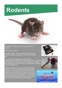 Rodent Pest Control Ryde