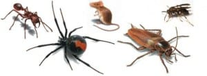 Pest control in the central coast