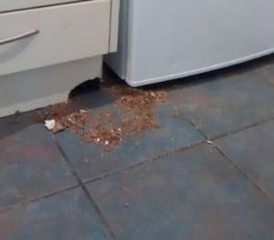 rats-under-kitchen-in-norwich-kitchen