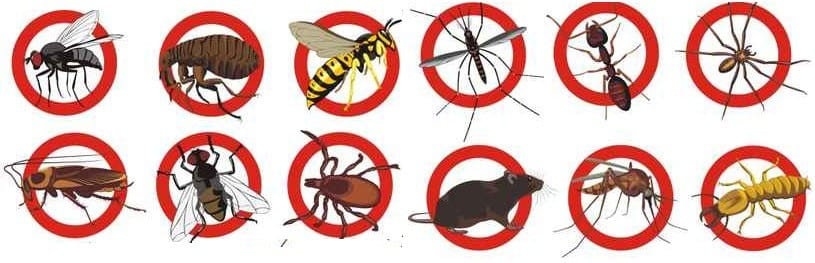Pest Control Wickham, NSW 2290