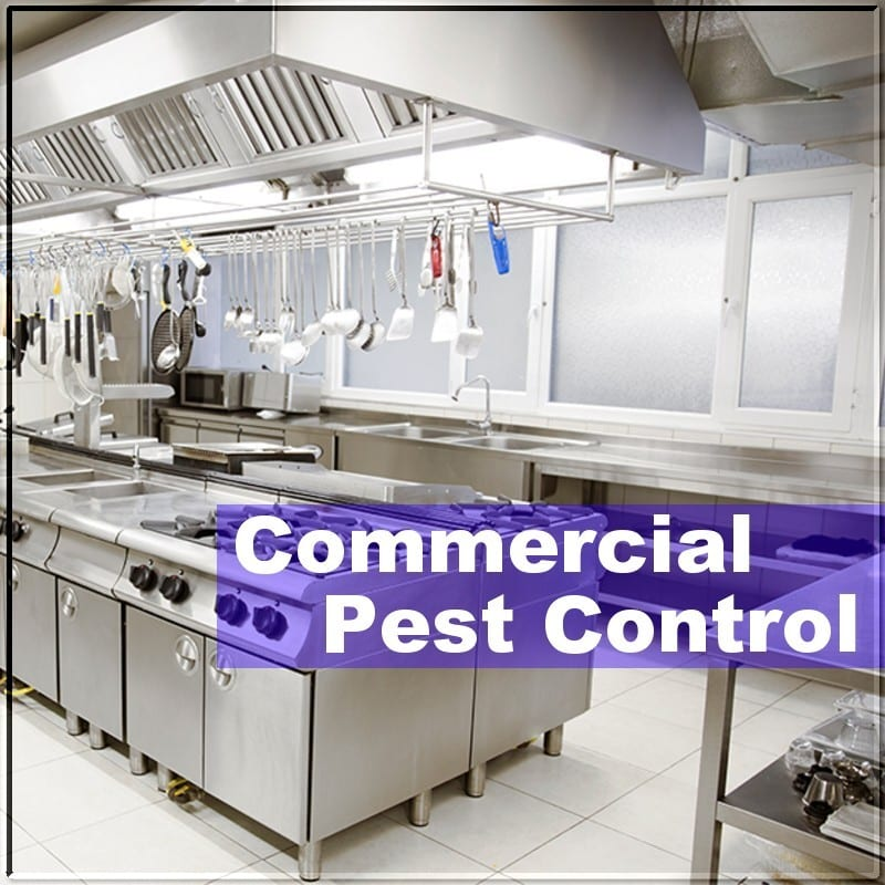 Commercial Pest Control for Businesses