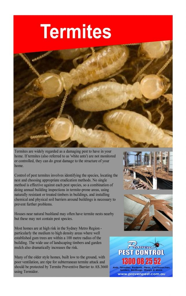 Termite Inspection and Treatment in Marrickville, NSW 2204