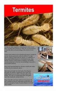 Termite Inspection and Treatment in Oakville, NSW 2765
