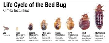 bed bugs, pest control, australia, bedbug control