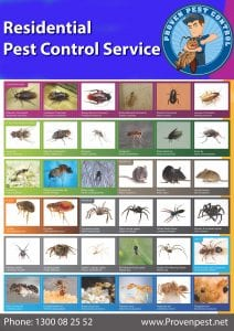 Pest Control in Balgowlah