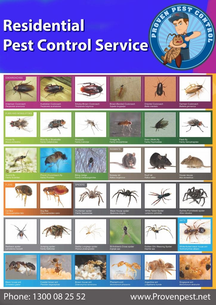 Pest Control in Fairfield West